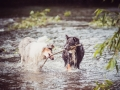 Langhaarcollie_Rough_Collie_bluemerle_Gaia_Welpe_Maggy_Border_Mischling_senior_tricolor_Hund_Hundefotografie_Tierfotografie_Marburg_Hundefreunde (1).jpg
