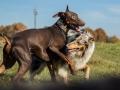 Hundemaedchen_Maggy_Gaia_Spencer_Mischling_Border_Collie_Langhaarcollie_Dobermann_Hundefreunde_Freunde_Spaziergang (168)