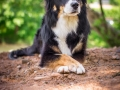 Nina_Herr_Border_Collie_Mischling_Maggy (2)