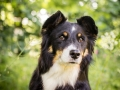 Nina_Herr_Border_Collie_Mischling_Maggy (4)