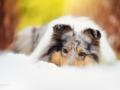 Hundemaedchen_Gaia_Langhaarcollie_Purrpawsfotografie_Nathalie_Große_ELOS_Event_Tierfotografie_Shooting (5)