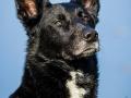 Tierfotografie_Hundefotografie_Marburg_Fotografin_Christine_Hemlep_Hund_Mischling_Schwarz_Balou (15)