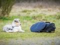 Fotografenbegleithund_Gaia_Fotograf_Begleithund_Langhaarcollie_Rough_Collie_bluemerle_Welpe_Baby_Puppy_Hund_Marburg (2)