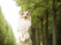 Hundemaedchen_Gaia_Langhaarcollie_Kassel_Fotoshooting_Seelentierfotografie (1)