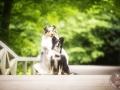 Hundemaedchen_Gaia_Langhaarcollie_Maggy_Border_Collie_Mischling_Kassel_Fotoshooting_Seelentierfotografie (1)