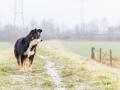 Hundemaedchen_Maggy_Border_Collie_Mix_Mischling_Senior_Hund_tricolor_Lahnwiesen_Marburg_Maedchen_Huendin (12)