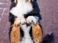 Hundemaedchen_Maggy_Border_Collie_Mix_Mischling_Senior_Hund_tricolor_Lahnwiesen_Marburg_Maedchen_Huendin (6)