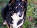 Hundefotografie_Hund_Tierfotografie_Marburg_Border_Collie_Mischling_Maggy_tricolor_Fotografin_Christine_Hemlep (1)