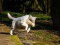 Hundefotografie_Hund_Tierfotografie_Marburg_Langhaarcollie_Collie_Gaia_blue_merle_Welpe_Baby_Hundebaby_Fotografin_Christine_Hemlep (19)