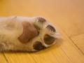 Gaia_Langhaarcollie_Collie_blue_merle_Einzug_neues_Heim_Welpe_Puppy_Junghund_Baby (109)