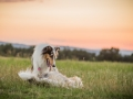 Langhaarcollies_Gaia_Lotte_Happy_Collie_Rough_bluemerle_sable_Hundefreunde_Freunde_Sonnenuntergang (11)