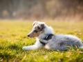 Hundefotografie_Marburg_Tierfotografie_Fotografin_Christine_Hemlep_Hund_Freundschaft_Greyhound_Collie_Welpe (14)