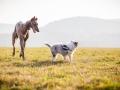 Hundefotografie_Marburg_Tierfotografie_Fotografin_Christine_Hemlep_Hund_Freundschaft_Greyhound_Collie_Welpe (5)