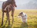 Hundefotografie_Marburg_Tierfotografie_Fotografin_Christine_Hemlep_Hund_Freundschaft_Greyhound_Collie_Welpe (7)