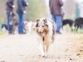 Hundefreunde_Marburg_Gassi_Spaziergang_Gassidate (107)