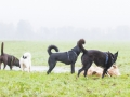 Hundefreunde_Marburg_Gassi_Spaziergang_Gassidate (24)