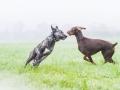 Hundefreunde_Marburg_Gassi_Spaziergang_Gassidate (48)
