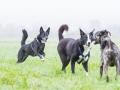 Hundefreunde_Marburg_Gassi_Spaziergang_Gassidate (52)