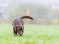 Hundefreunde_Marburg_Gassi_Spaziergang_Gassidate (57)