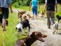 Hundefreunde_Marburg_Gassitreffen_Hundetreffen_Treffen_Hunde_Gassi (14)