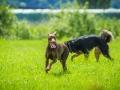 Hundefreunde_Marburg_Gassitreffen_Hundetreffen_Treffen_Hunde_Gassi (16)