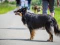 Hundefreunde_Marburg_Gassitreffen_Hundetreffen_Treffen_Hunde_Gassi (33)