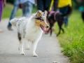 Hundefreunde_Marburg_Gassitreffen_Hundetreffen_Treffen_Hunde_Gassi (53)