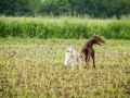 Hundefreunde_Marburg_Gassitreffen_Hundetreffen_Treffen_Hunde_Gassi (84)