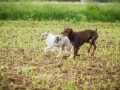 Hundefreunde_Marburg_Gassitreffen_Hundetreffen_Treffen_Hunde_Gassi (90)