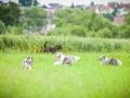 Hundefreunde_Marburg_Hundetreffen_Treffen_Gassi_Langhaarcollie_Gaia_Border_Collie_Mischling_Maggy (1) - Kopie