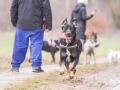 Hundemaedchen_Maggy_Gaia_Gassitreffen_Hundefreunde_Rauschenberg_Marburg_Hunde_Langhaarcollie_Collie (1)