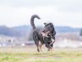 Hundemaedchen_Maggy_Gaia_Gassitreffen_Hundefreunde_Rauschenberg_Marburg_Hunde_Langhaarcollie_Collie (15)