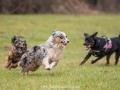 Hundemaedchen_Maggy_Gaia_Gassitreffen_Hundefreunde_Rauschenberg_Marburg_Hunde_Langhaarcollie_Collie (63)