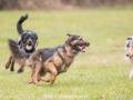 Hundemaedchen_Maggy_Gaia_Gassitreffen_Hundefreunde_Rauschenberg_Marburg_Hunde_Langhaarcollie_Collie (64)