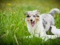Hundetreffen_Marurg_Greyhound_Dobermann_Langhaarcollie_Border_Collie_Mischling_Gaia_Maggy_HemlepFotografie_treffen (21)