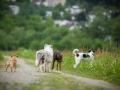 Hundetreffen_Marurg_Greyhound_Dobermann_Langhaarcollie_Border_Collie_Mischling_Gaia_Maggy_HemlepFotografie_treffen (37)