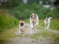 Hundetreffen_Marurg_Greyhound_Dobermann_Langhaarcollie_Border_Collie_Mischling_Gaia_Maggy_HemlepFotografie_treffen (40)
