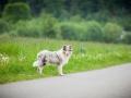Hundetreffen_Marurg_Greyhound_Dobermann_Langhaarcollie_Border_Collie_Mischling_Gaia_Maggy_HemlepFotografie_treffen (52)