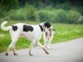 Hundetreffen_Marurg_Greyhound_Dobermann_Langhaarcollie_Border_Collie_Mischling_Gaia_Maggy_HemlepFotografie_treffen (53)