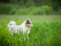 Hundetreffen_Marurg_Greyhound_Dobermann_Langhaarcollie_Border_Collie_Mischling_Gaia_Maggy_HemlepFotografie_treffen (61)