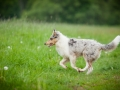 Hundetreffen_Marurg_Greyhound_Dobermann_Langhaarcollie_Border_Collie_Mischling_Gaia_Maggy_HemlepFotografie_treffen (69)