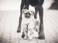 Hundetreffen_Marurg_Greyhound_Dobermann_Langhaarcollie_Border_Collie_Mischling_Gaia_Maggy_HemlepFotografie_treffen (90)