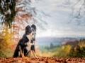 Hundemaedchen_Maggy_Border_Collie_Mischling_Mix_Hundefotografie_Hund_Fotografin_Christine_Hemlep (1)