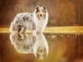 Hundemaedchen_Gaia_Langhaarcollie_Collie_Rough_bluemerle_Hundefotografie_Marburg_Hochwasser_Lahn_Fotografin_Christine_Hemlep (3)