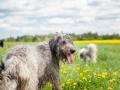 Hundefreunde_Marburg_Gassi_Treffen_Hund_Hunde_Freunde_Coelbe_Spaziergang (107).jpg