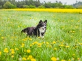 Hundefreunde_Marburg_Gassi_Treffen_Hund_Hunde_Freunde_Coelbe_Spaziergang (113).jpg