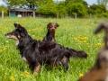 Hundefreunde_Marburg_Gassi_Treffen_Hund_Hunde_Freunde_Coelbe_Spaziergang (120).jpg
