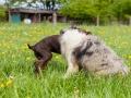 Hundefreunde_Marburg_Gassi_Treffen_Hund_Hunde_Freunde_Coelbe_Spaziergang (126).jpg