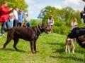 Hundefreunde_Marburg_Gassi_Treffen_Hund_Hunde_Freunde_Coelbe_Spaziergang (25).jpg