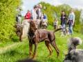 Hundefreunde_Marburg_Gassi_Treffen_Hund_Hunde_Freunde_Coelbe_Spaziergang (30).jpg